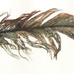 feathersmall