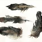 featherssmall